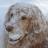 Opie's avatar