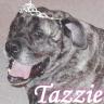 Tazzie
