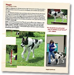 Tripawd Heroes Book Sample