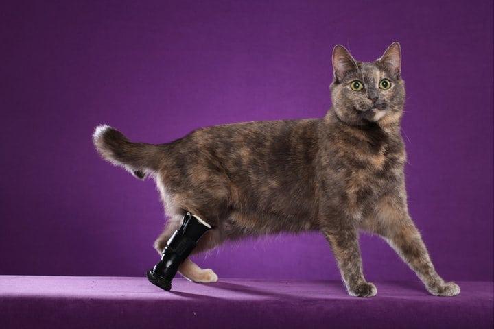 OrthoPets Cat