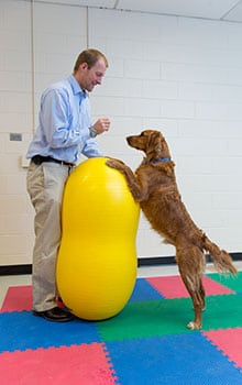felix duerr with dog on ball