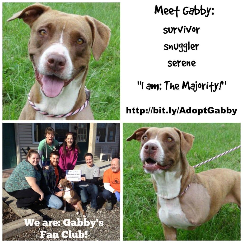 AdoptGabby