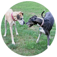 three legged dog and cat live chat room