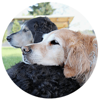 three legged dog and cat forums