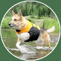 best three legged dog products
