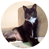 three legged cat and dog blogs