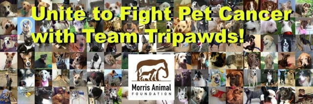 Tripawds and Morris Animal Foundation Fight Pet Cancer