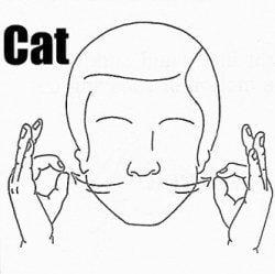 American Sign Language Cat