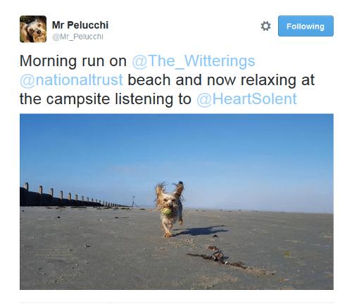 three-legged dog Twitter