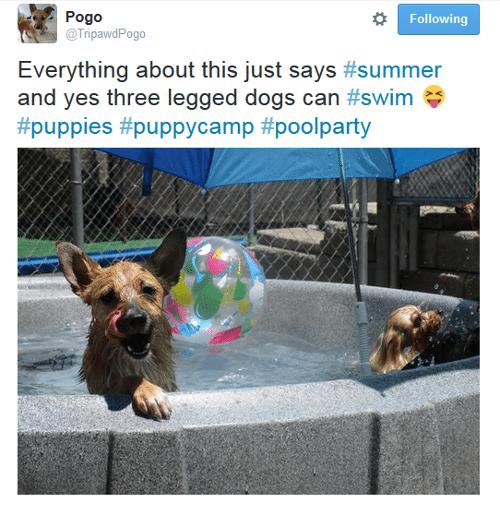 tripawd dog twitter
