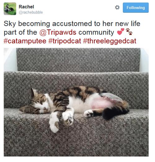 tripawd cat twitter