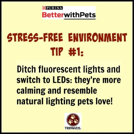 Purina #BetterWithPets Tip