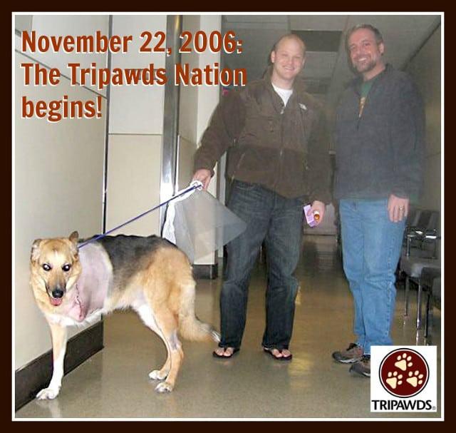 Tripawd dog story