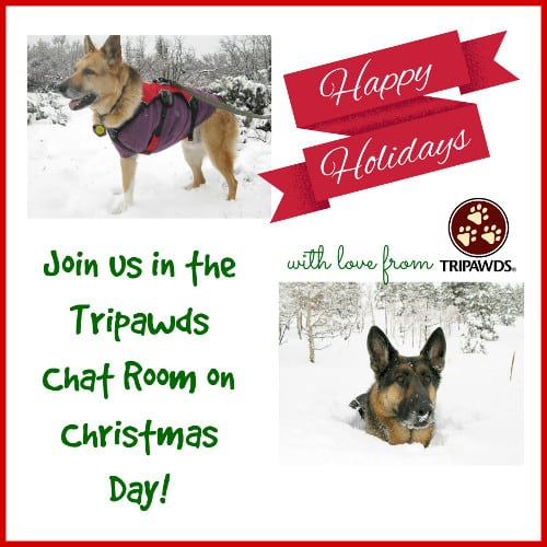 Tripawds Christmas Chat