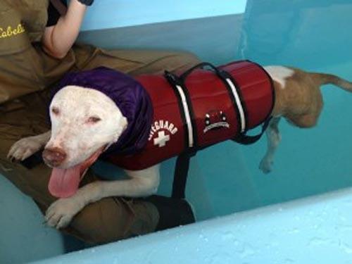 Tripod Dog Rehab at Integrative Pet Care
