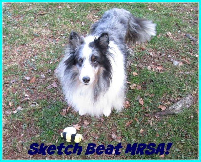 Tripawd Sketch beats MRSA