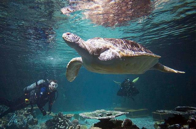 Calypso Tripawd Turtle