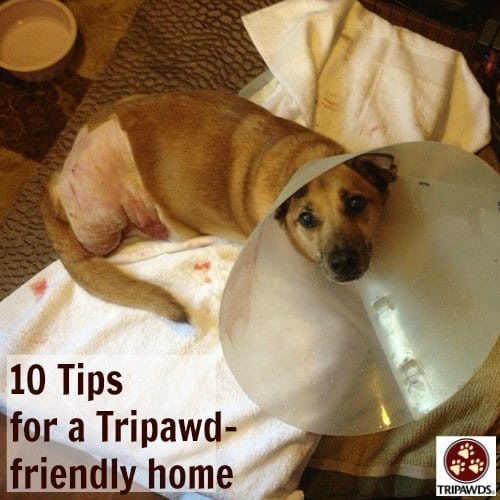 Tripawd home care tips