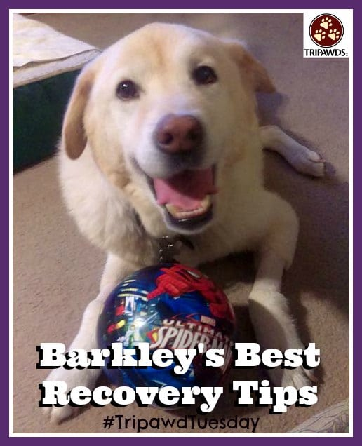 Tripawd recovery tips
