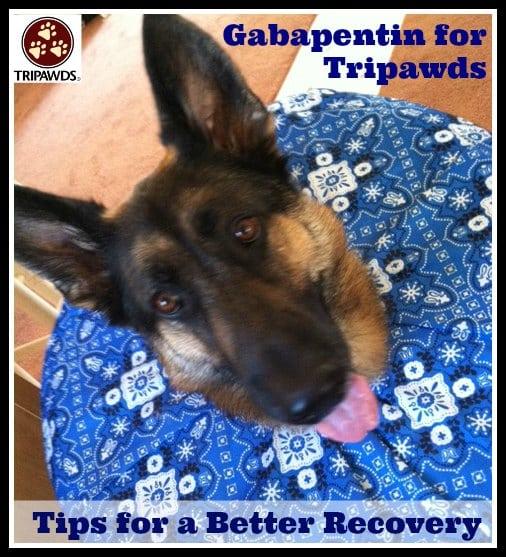 Gabapentin Tripawds