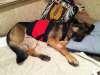 Wyatt sleeps on Fentanyl