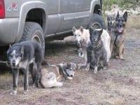 Odaroloc Sled Dogs