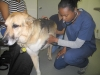 Jerry gets a checkup at County Line Animal Hospital
