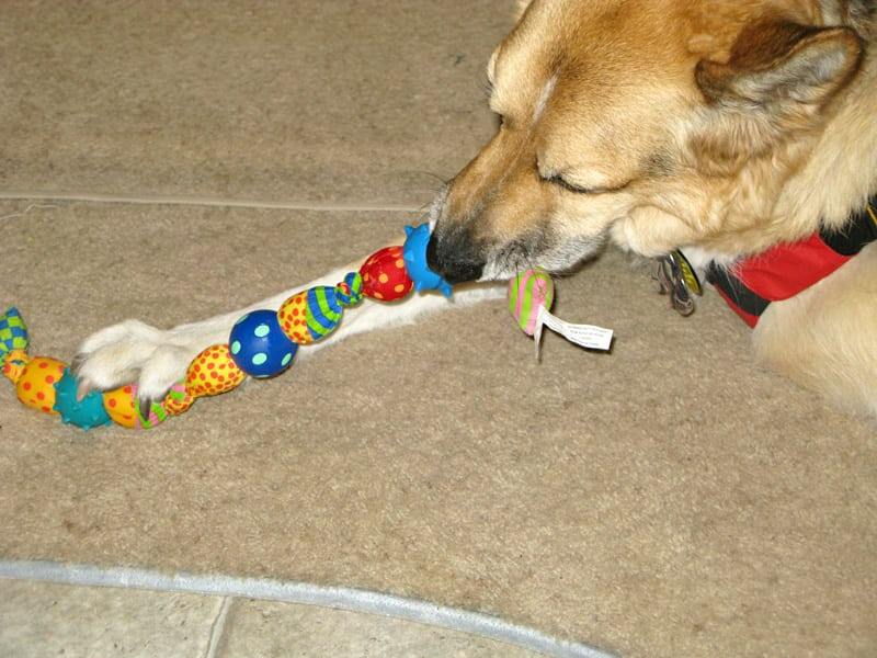 Jerry plays with gift from Lalla