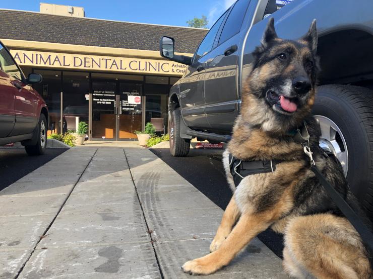 Portland Oregon Dog Dentist