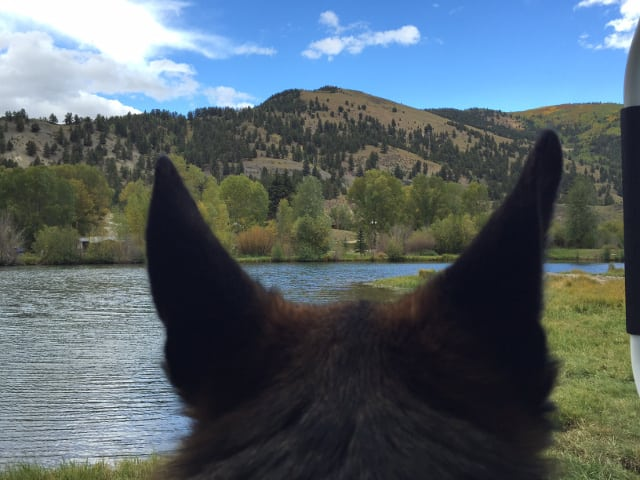 German Shepherd, Tripawd, Lake City, Colorado