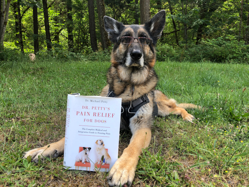 Tripawd dog pain relief