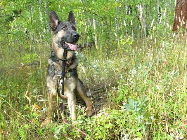 Wyatt on walk in the Crystal Lakes woods