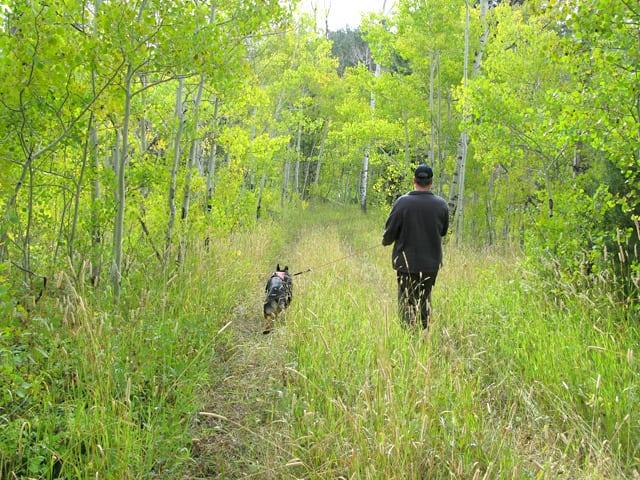 tripawd, dog, walk