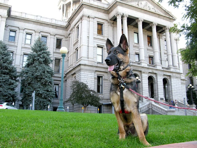 Wyatt Standing Guard at Denver CO Capitol  Building