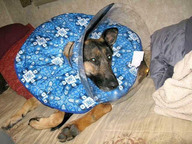 Double Cone of Shame for Wyatt