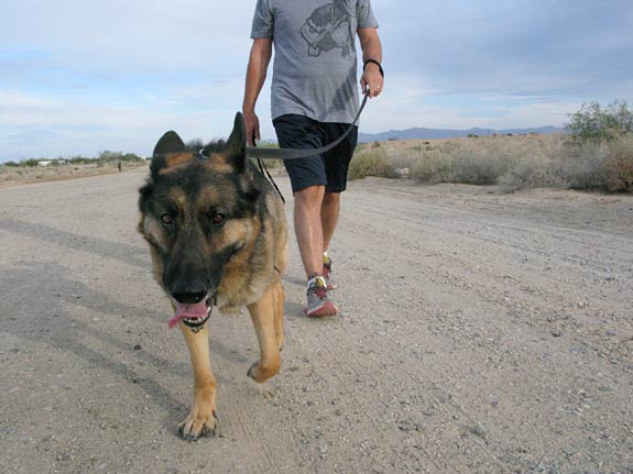 tripawds wyatt walks in desert