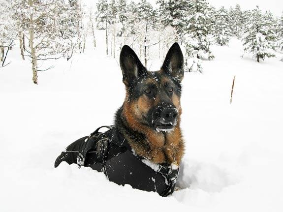 tripawds wyatt in rocky mountain snow