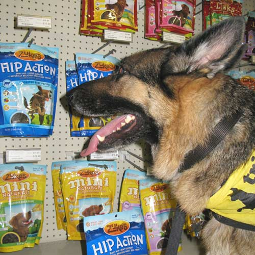 Three legged GSD Wyatt enjoys Zukes Dog Treats