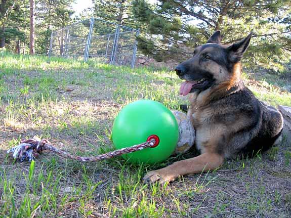 Tuggo Dog Toys, interactive, games, dogs