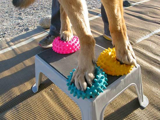 tripawd, three-legged, dog, amputee, german shepherd, fitness, balance, strengthen, muscles