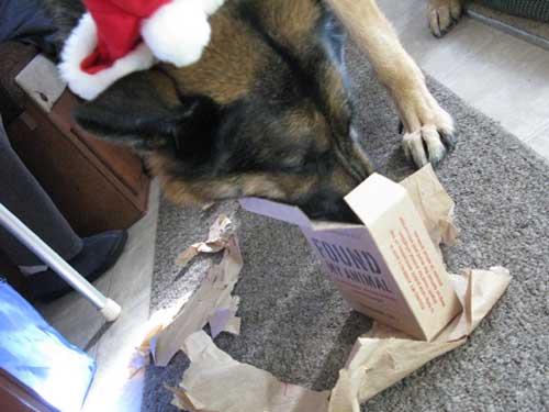 Wyatt Christmas Present