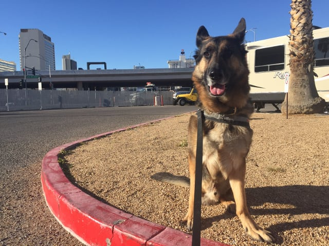 Tripawd, WVC, Las Vegas, German Shepherd