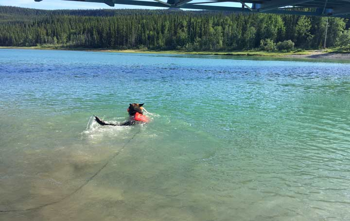 Tripawd in Alaska
