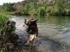 See a Tripawd Swim