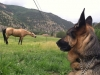 Wyatt Watches Vickers Ranch Horses