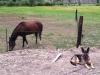 Wyatt guards horses