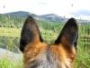 Wyatt Watches Over Vickers upper Ranch