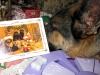 Tired Wyatt Reads Pugapalooza Christmas Card