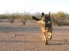 Wyatt runs in Ruff Wear Grip Trex boots in Arizona desert.
