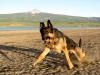 Wyatt runs at Miramonte Lake, Colorado